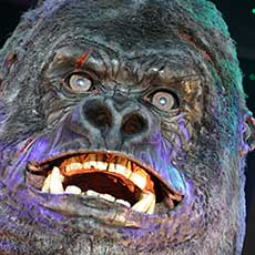 Little Ernie - Animatronic gorilla for hire